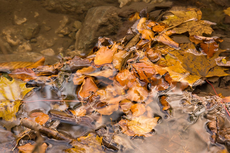Blätter im Bach