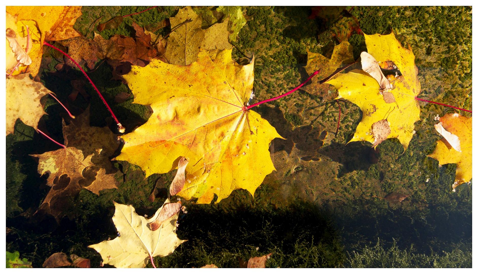 Blätter im Brunnen