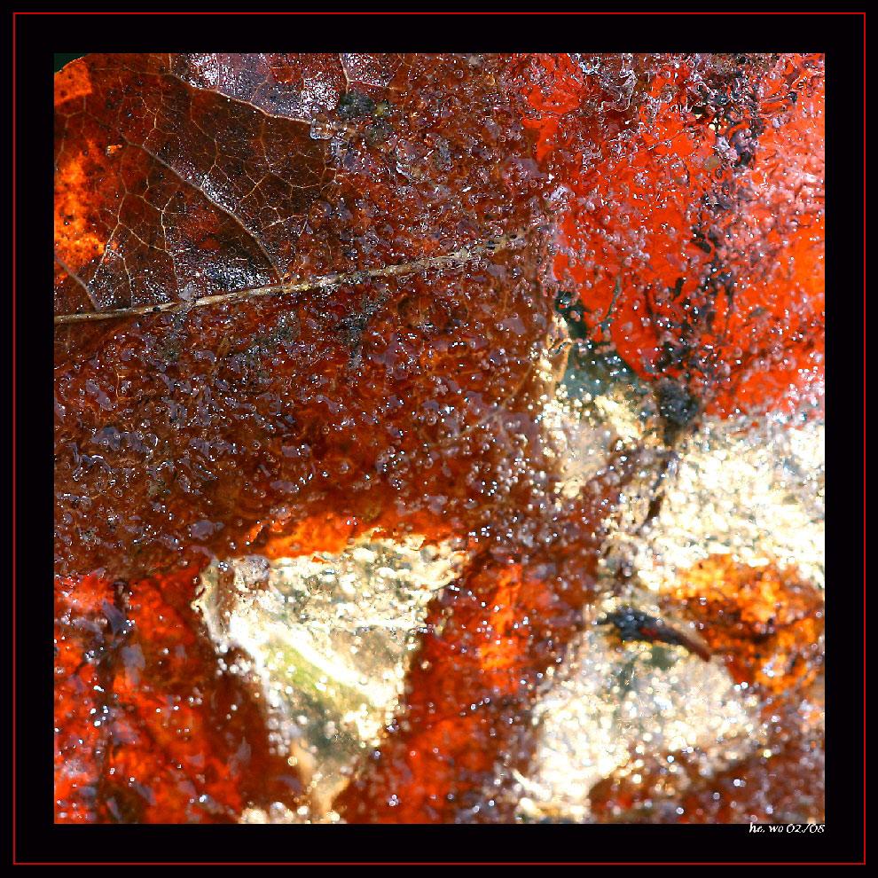 Blätter im Eis........