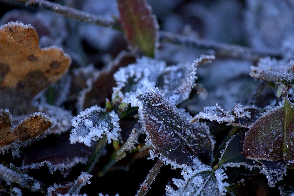 Blätter im Eis