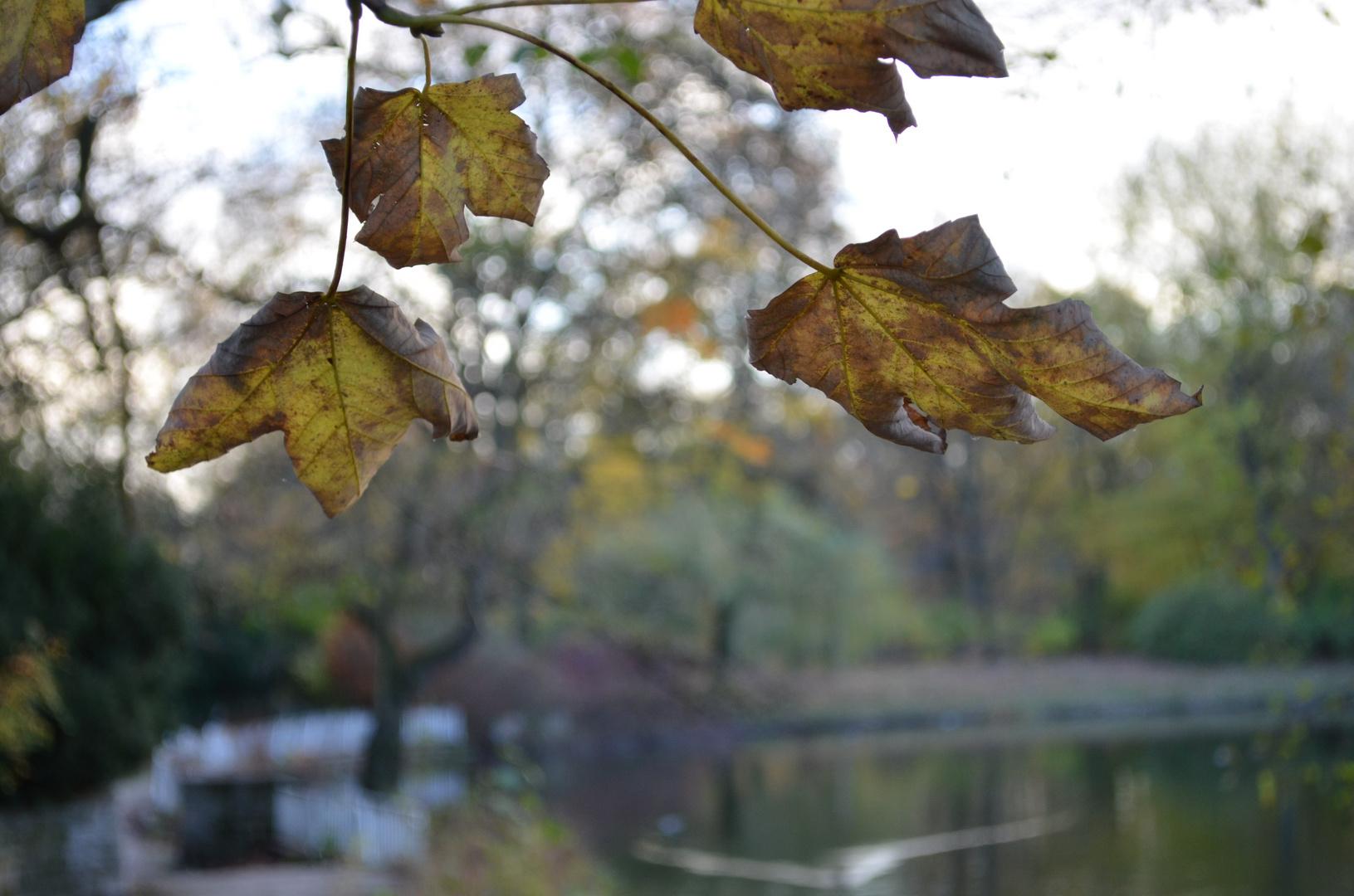 Blätter im Geäst