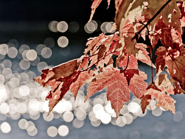 Blätter im Herbstlicht