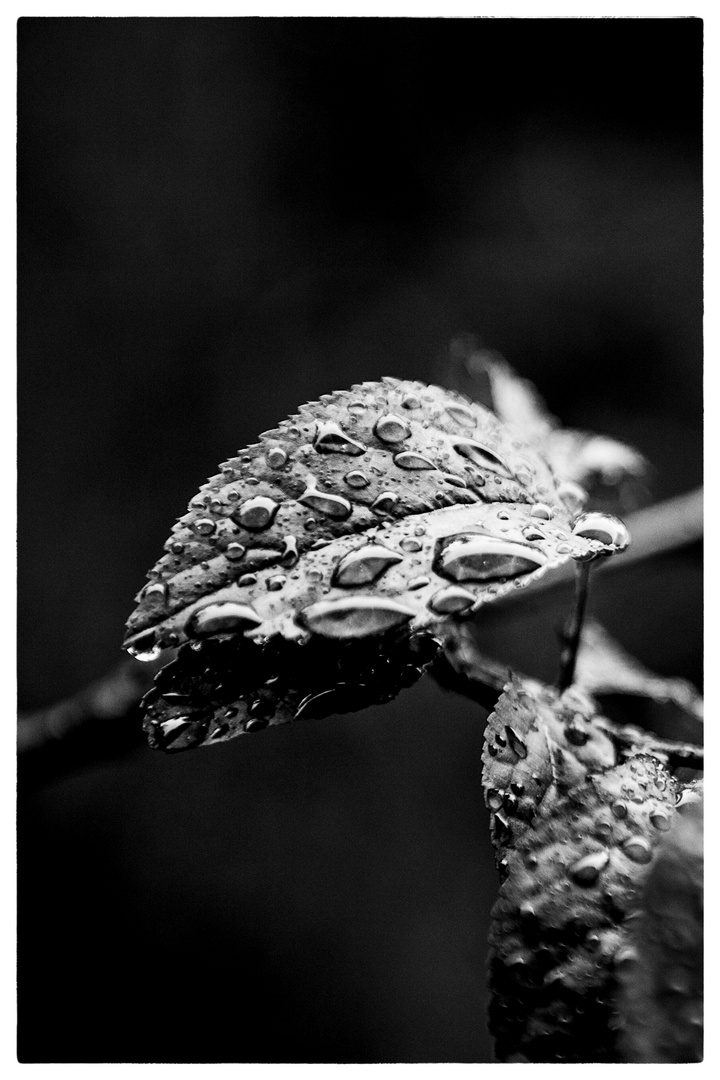 Blätter im Regen # II