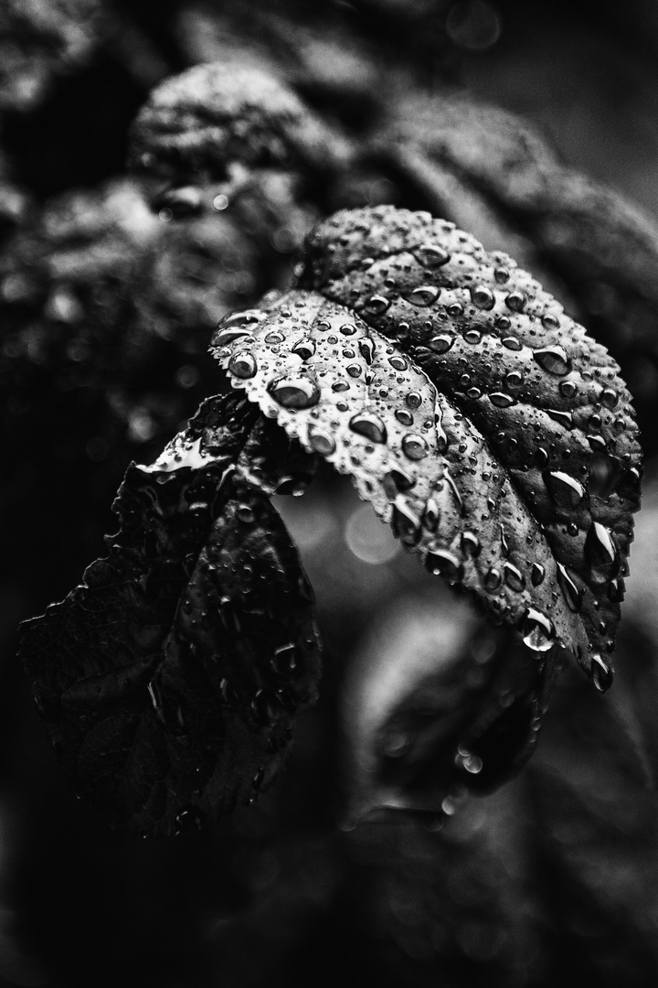 Blätter im Regen # III