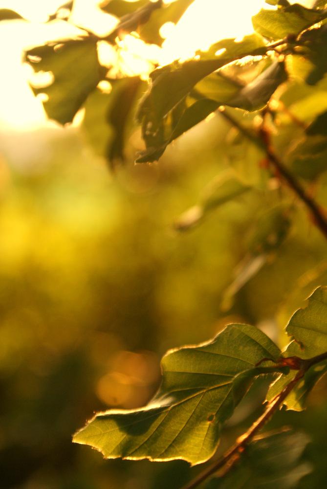 Blätter im Sonnenschein