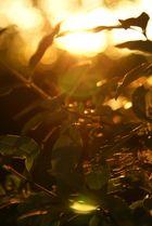 Blätter im Sonnenschein2