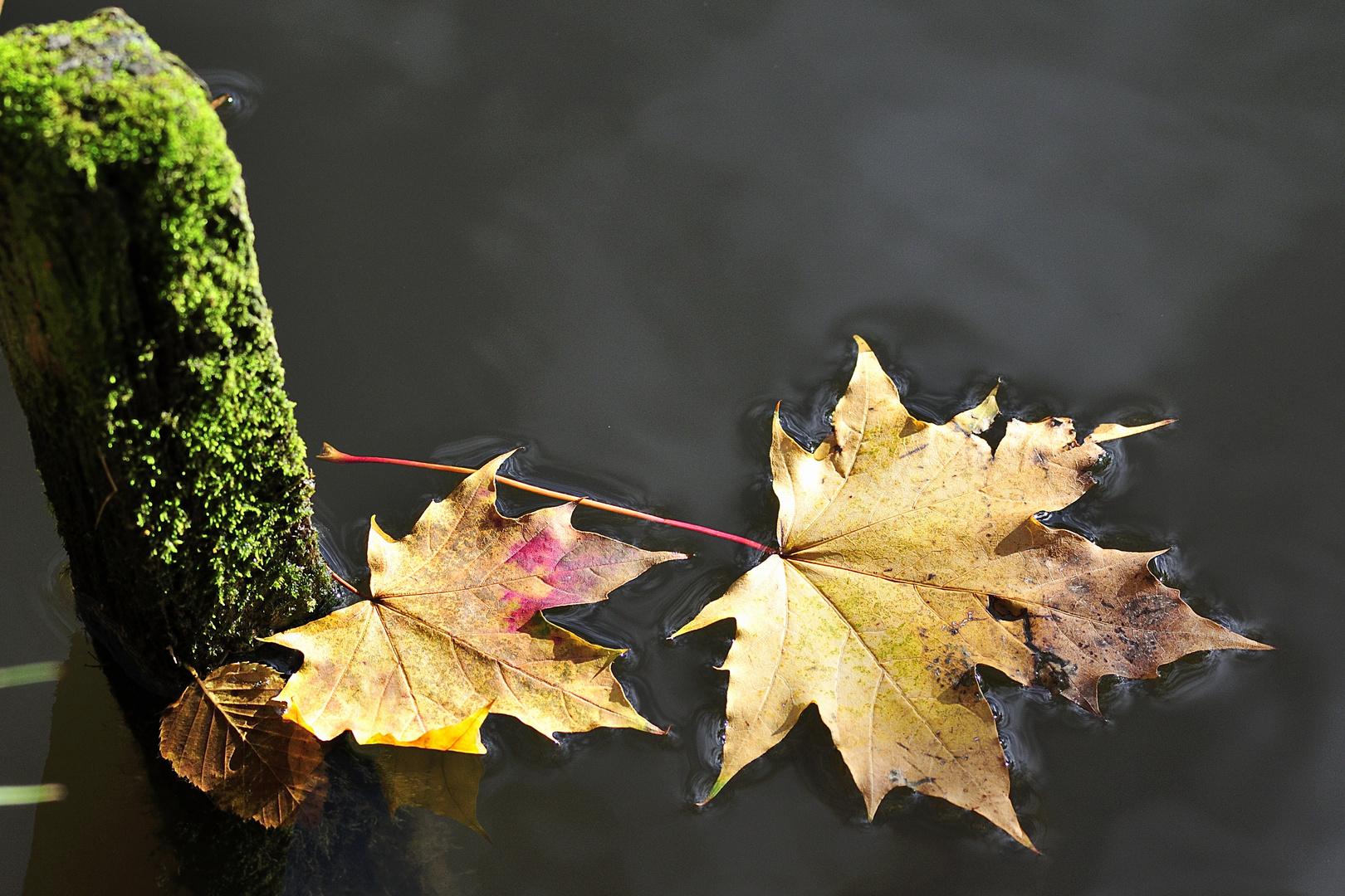 Blätter im Teich