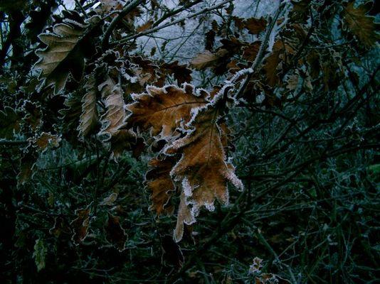 Blätter im Winter