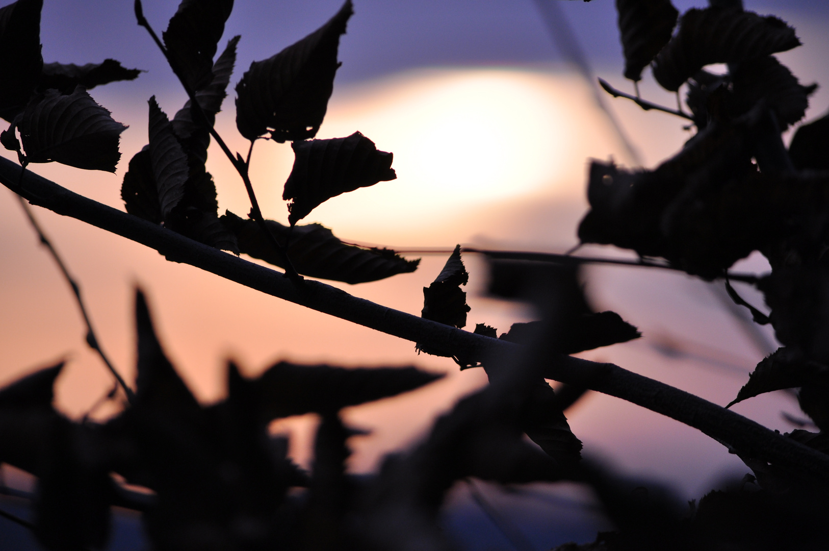 Blätter in Abendstimmung 2