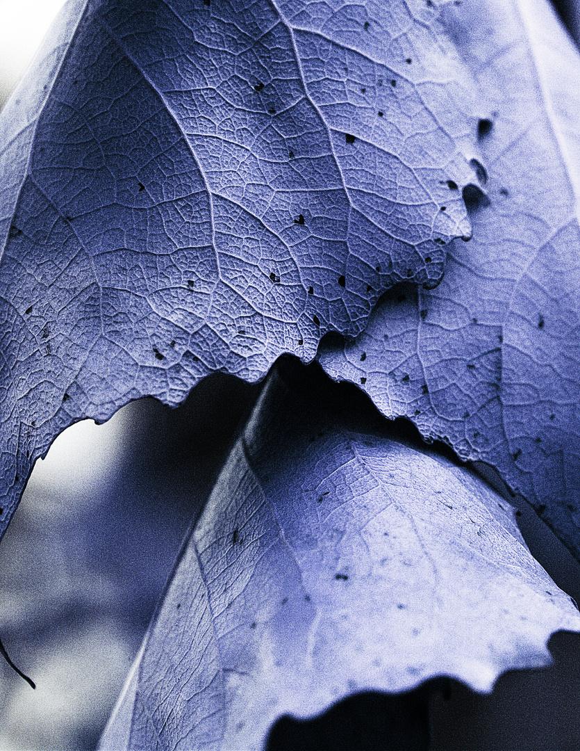 Blätter in Blau