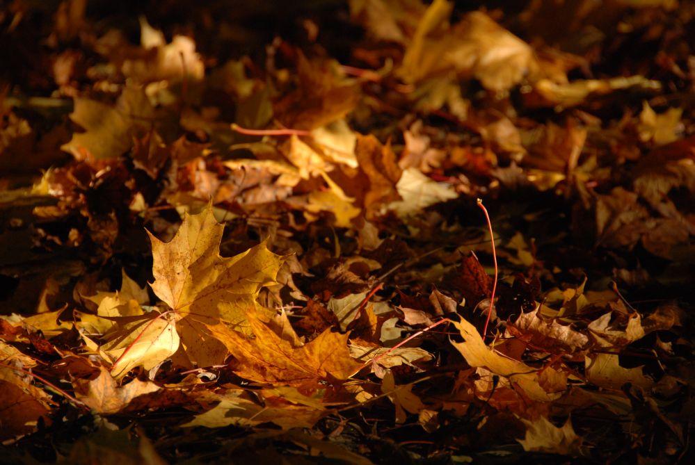 Blätter in der Herbstsonne