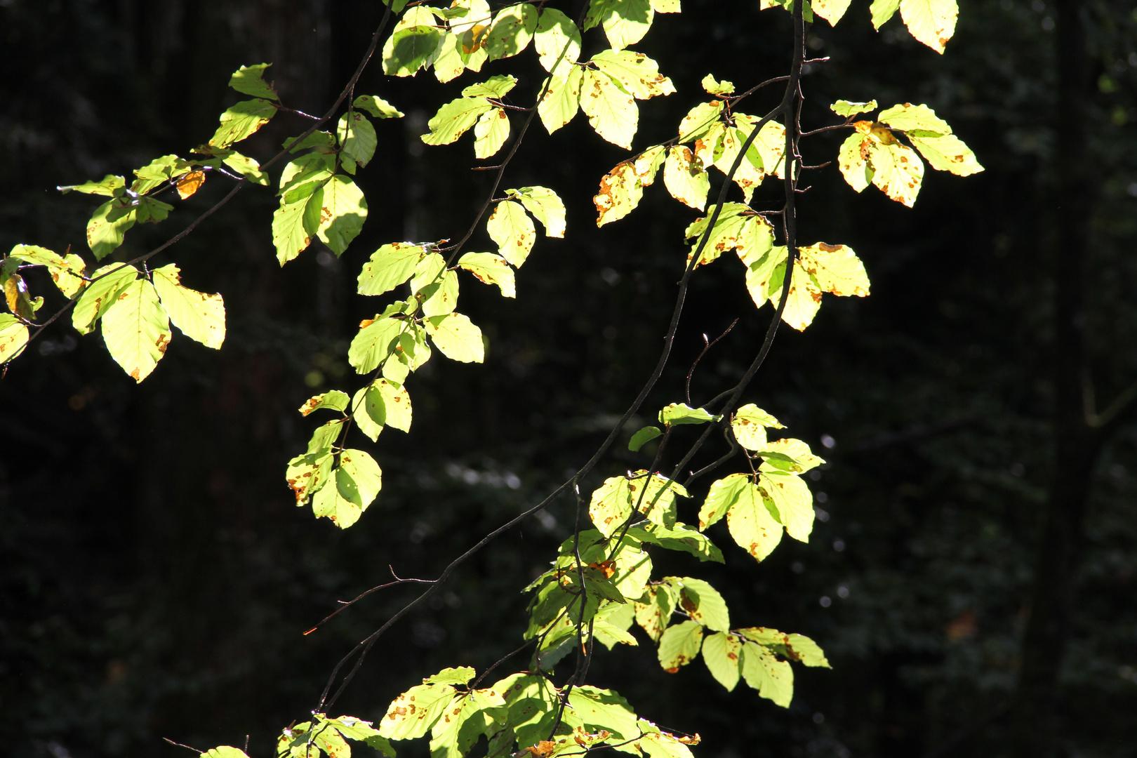 Blätter in der Sonne