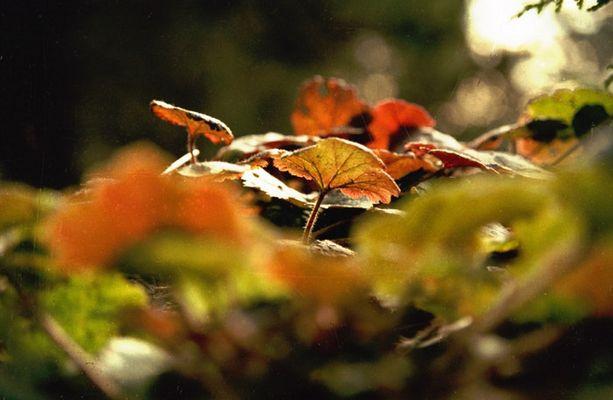 Blätter in Orange