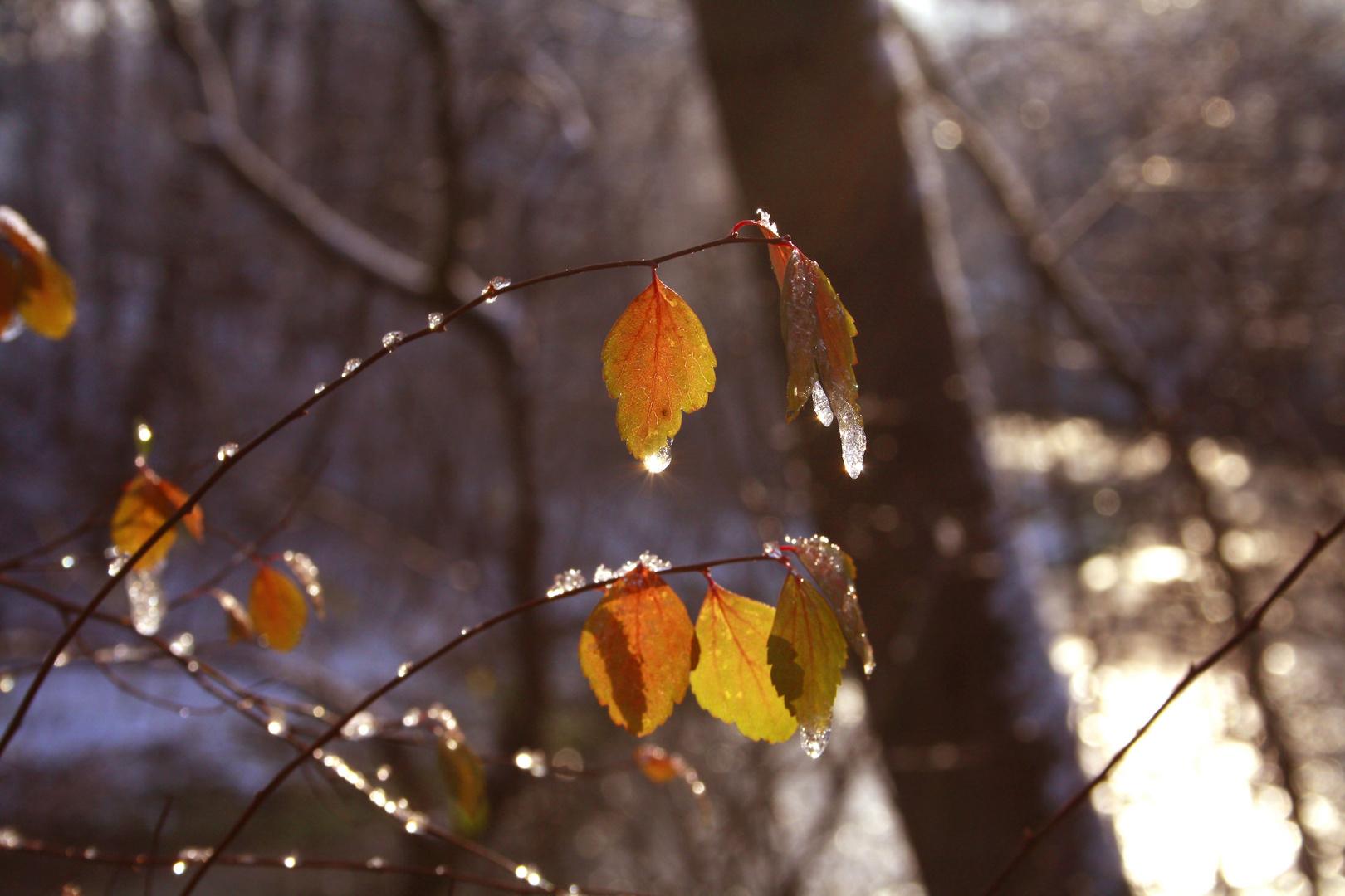 Blätter mit Eis im Herbst