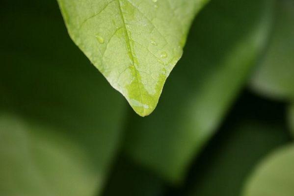 Blätter nach dem Regen