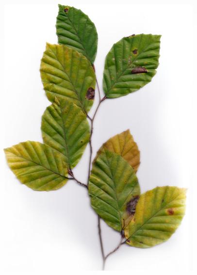 Blätter Nr. 3