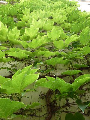 Blätter-Stau