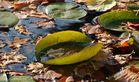 Blätter - Teich im - Herbst