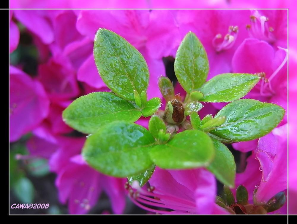 Blätter und Blüten