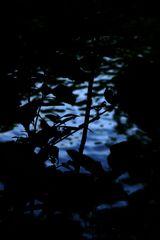 Blätter und Gewässer