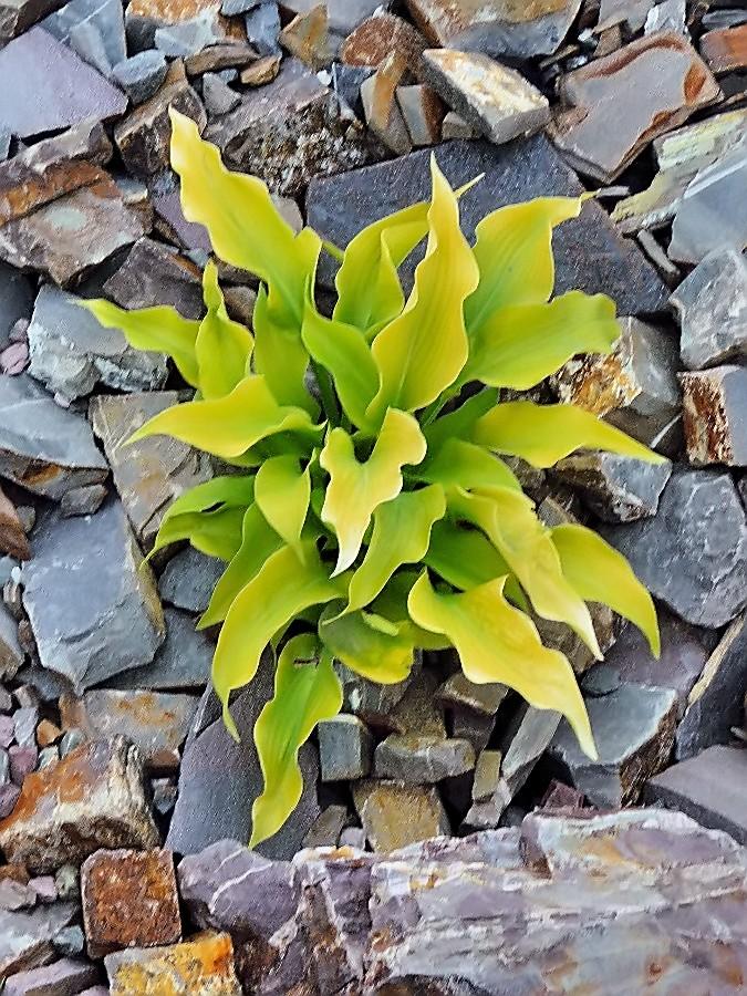 Blätter und Steine