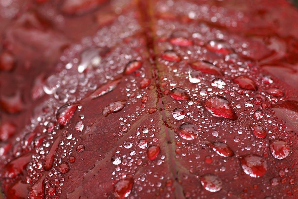 Blätter und Tau 2
