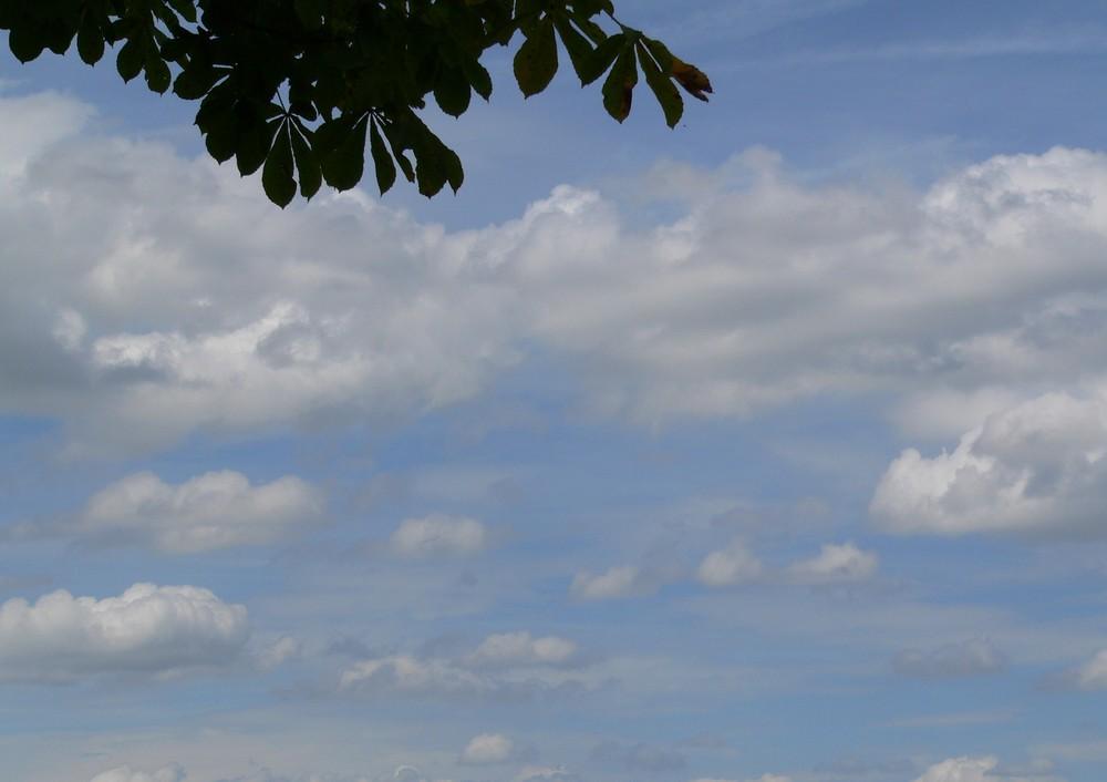 blätter und wolken