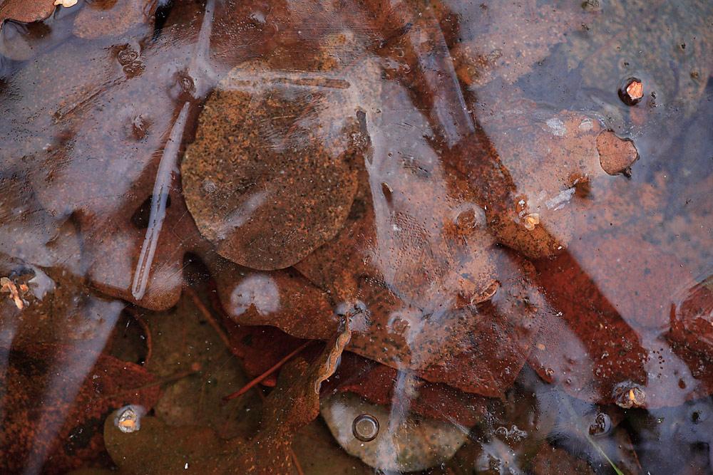Blätter unter Eis