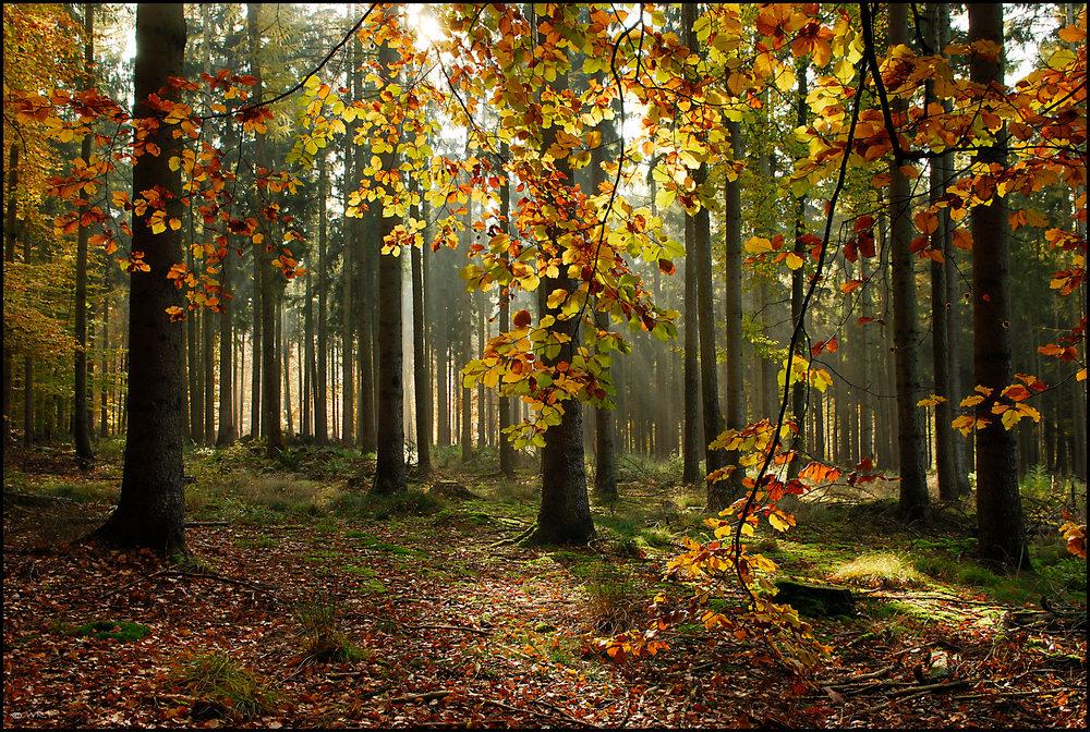Blätter Vorhang