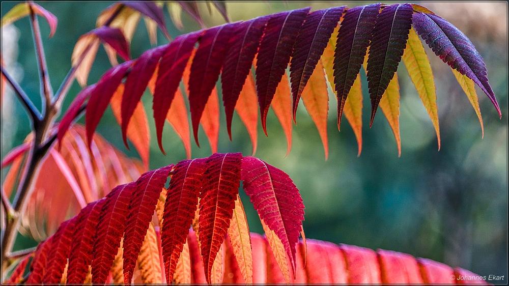 Blätterbogen