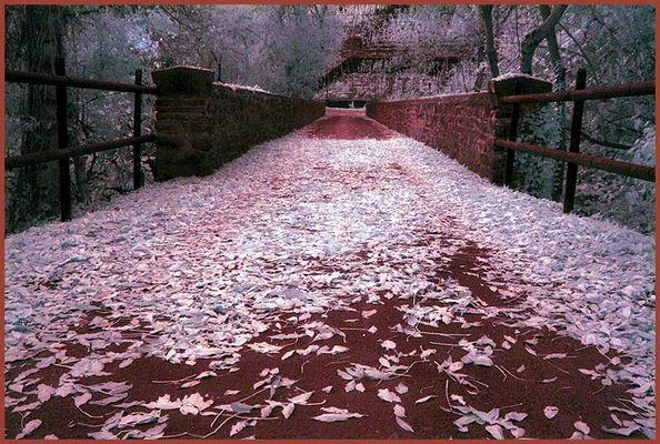 Blätterbrücke