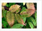 Blätterfärbung