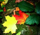 Blätterfarbenspiel