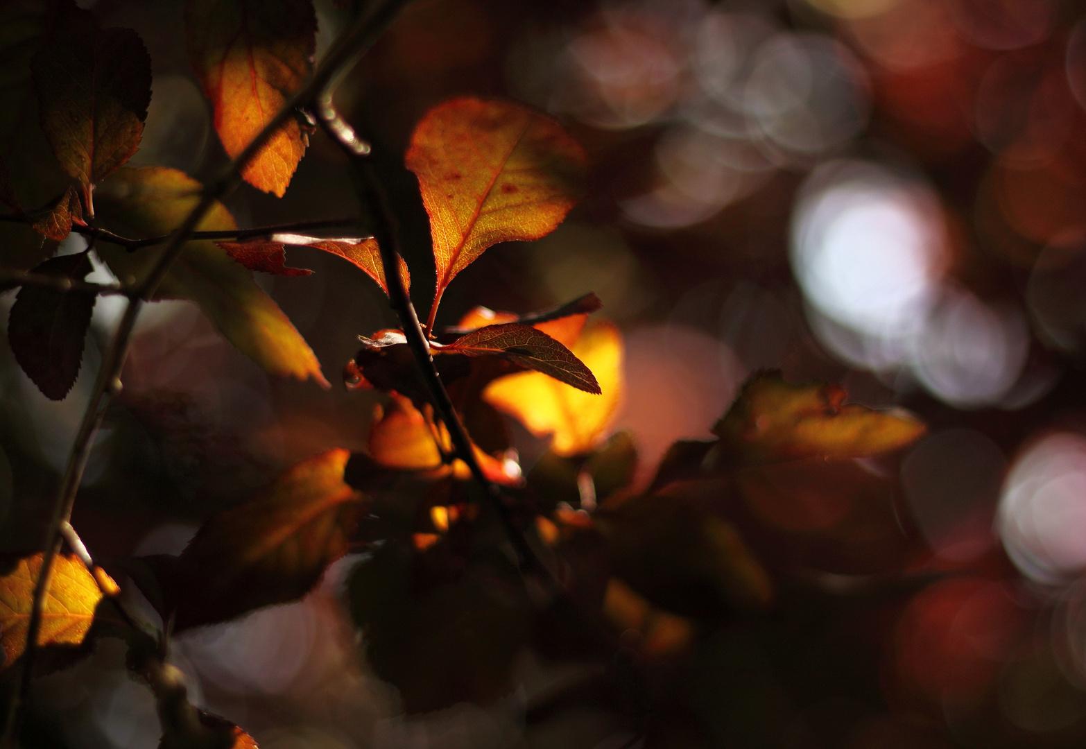 Blätterfeuerwerk