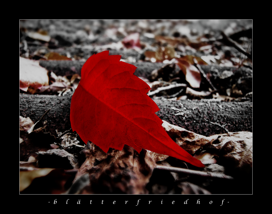 -blätterfriedhof- Version III