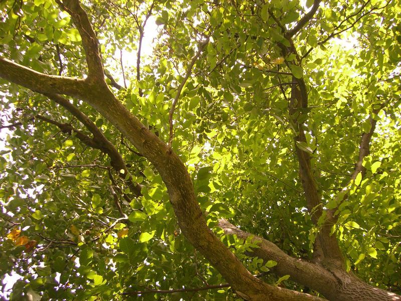 Blättergeflecht