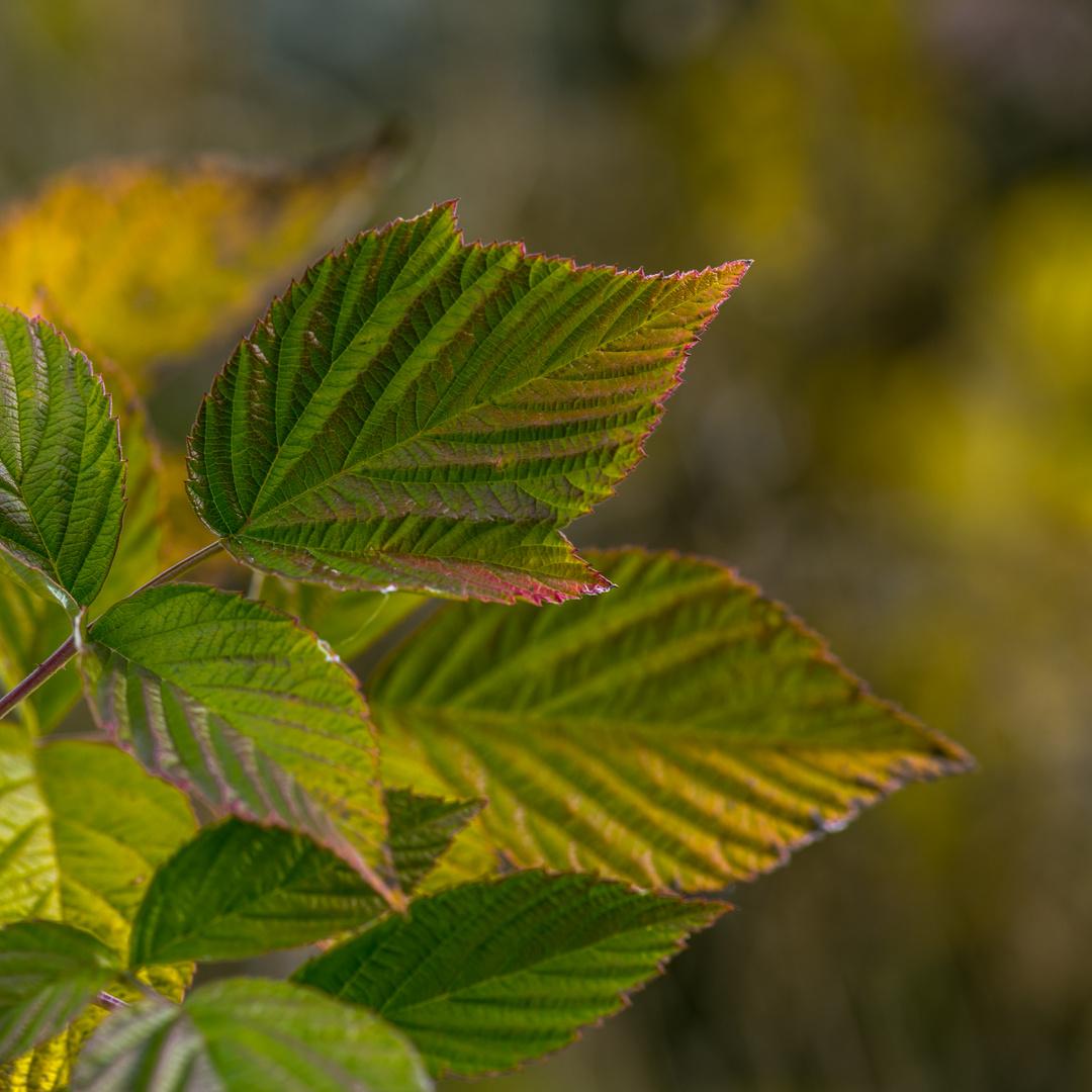 Blättergeplauder