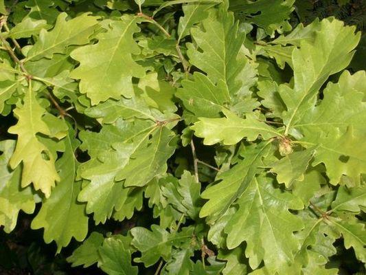 Blättergrün