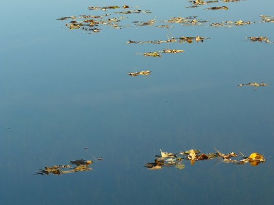 Blätterinseln