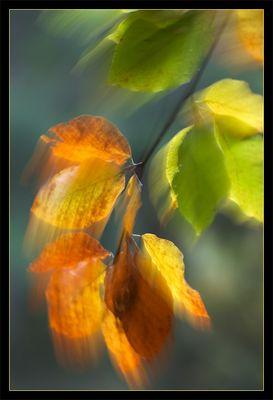Blätterrauschen