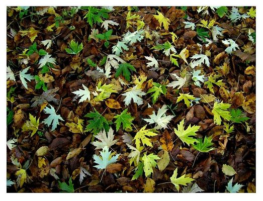 Blätterregen
