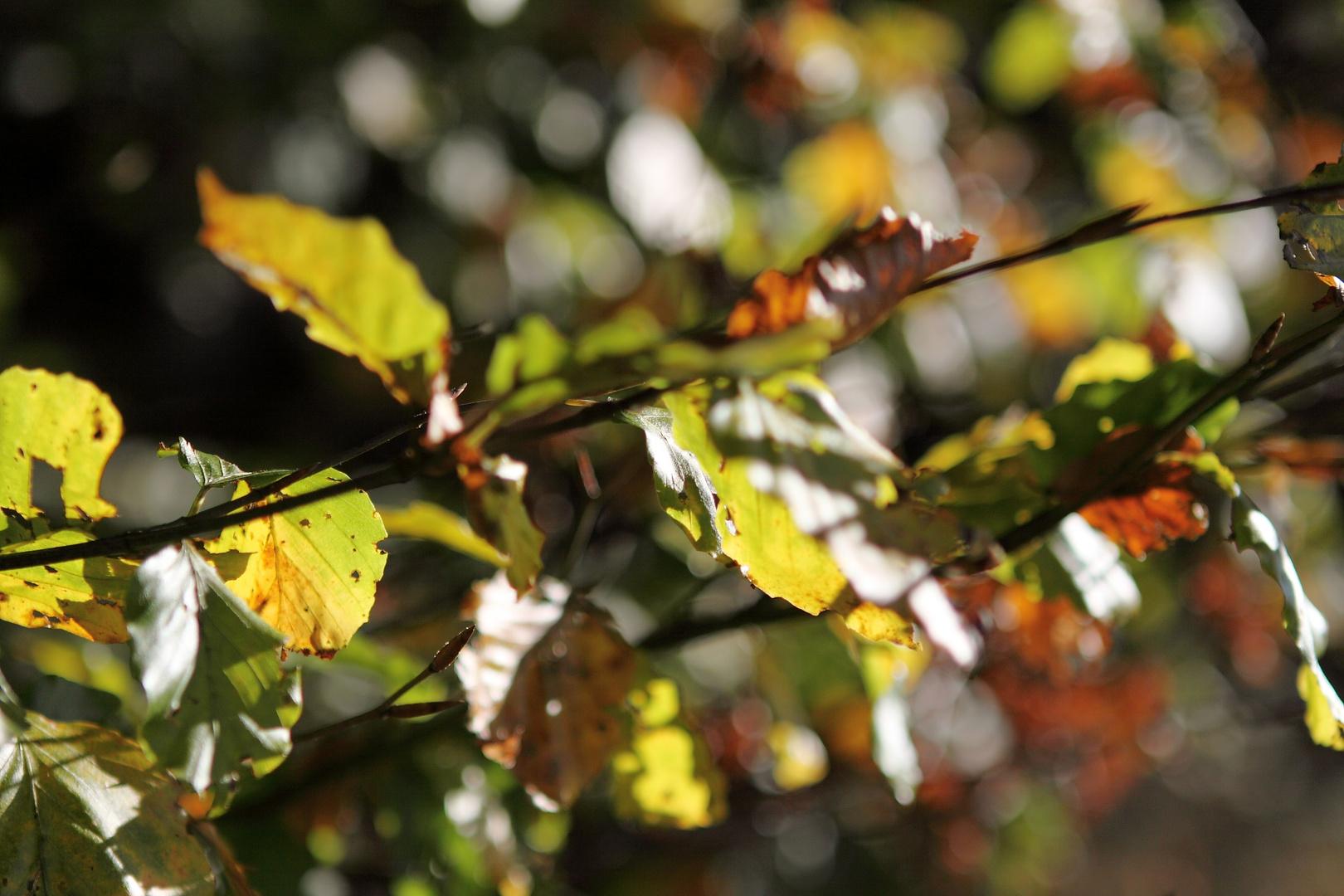 Blättersammlung_NO1