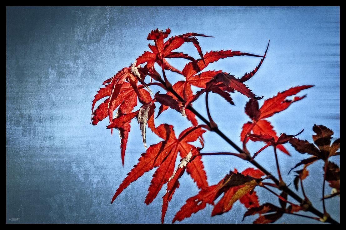 Blätterschimmer