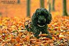 Blätterspaß