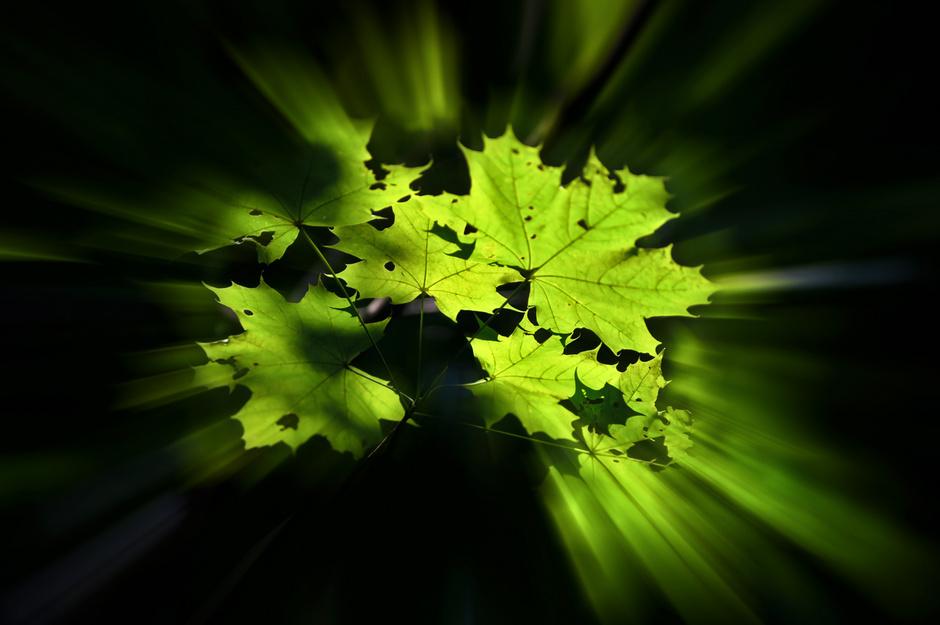 Blätterstrahlung