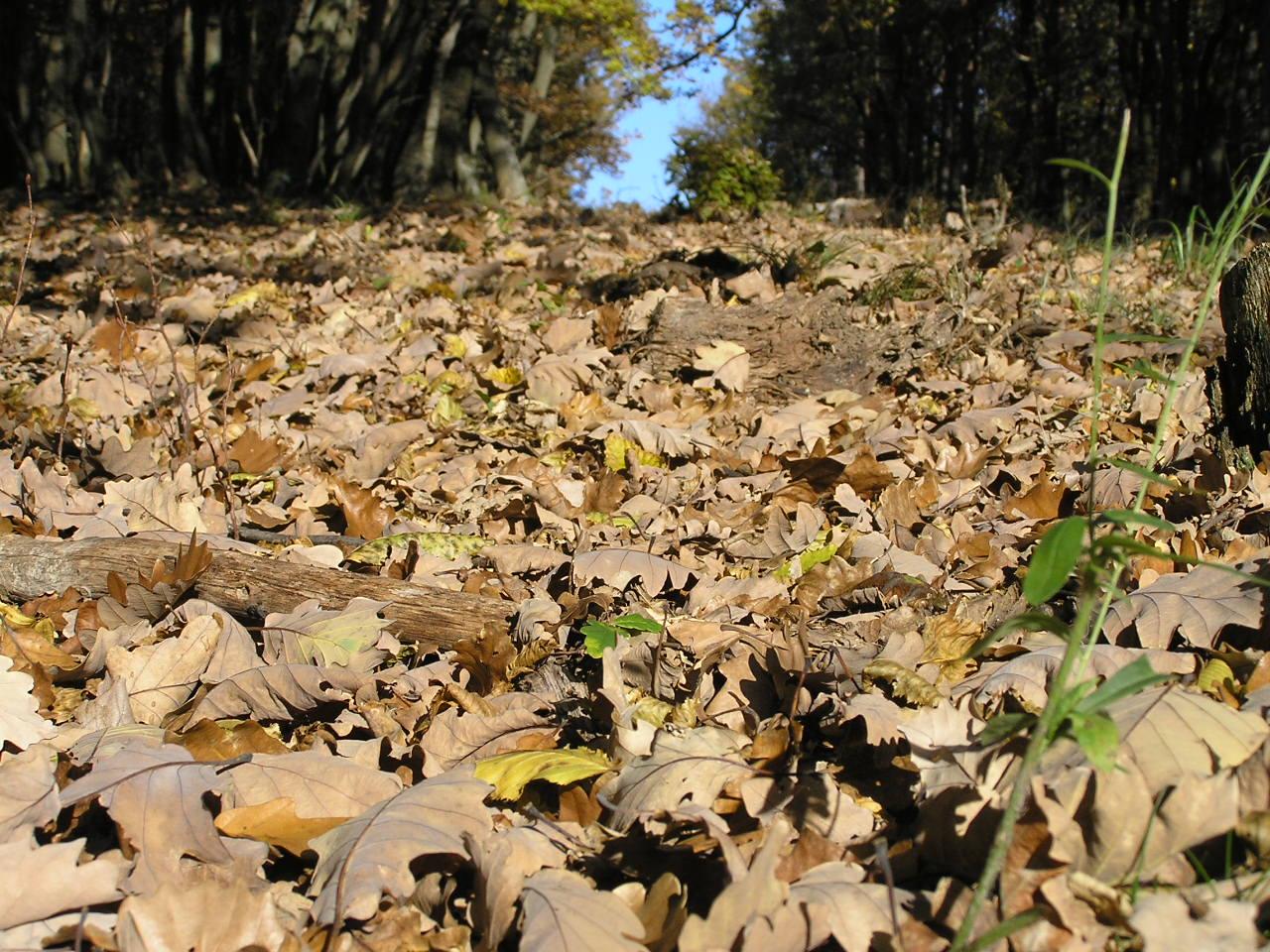 Blätterteppich