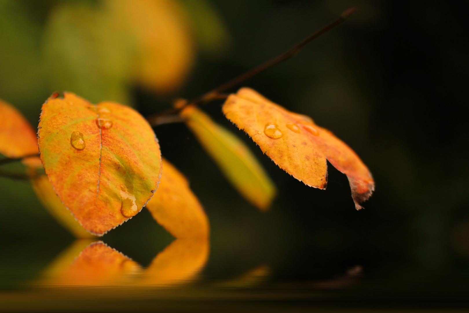 Blättertropfen