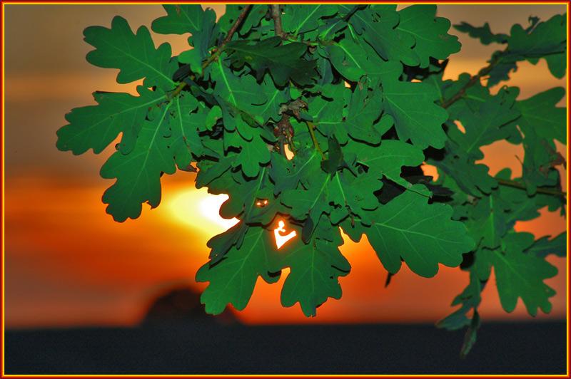 Blätteruntergang