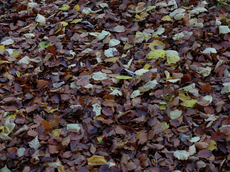 Blättervielfalt