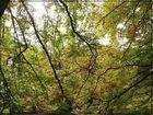 Blätterwelt